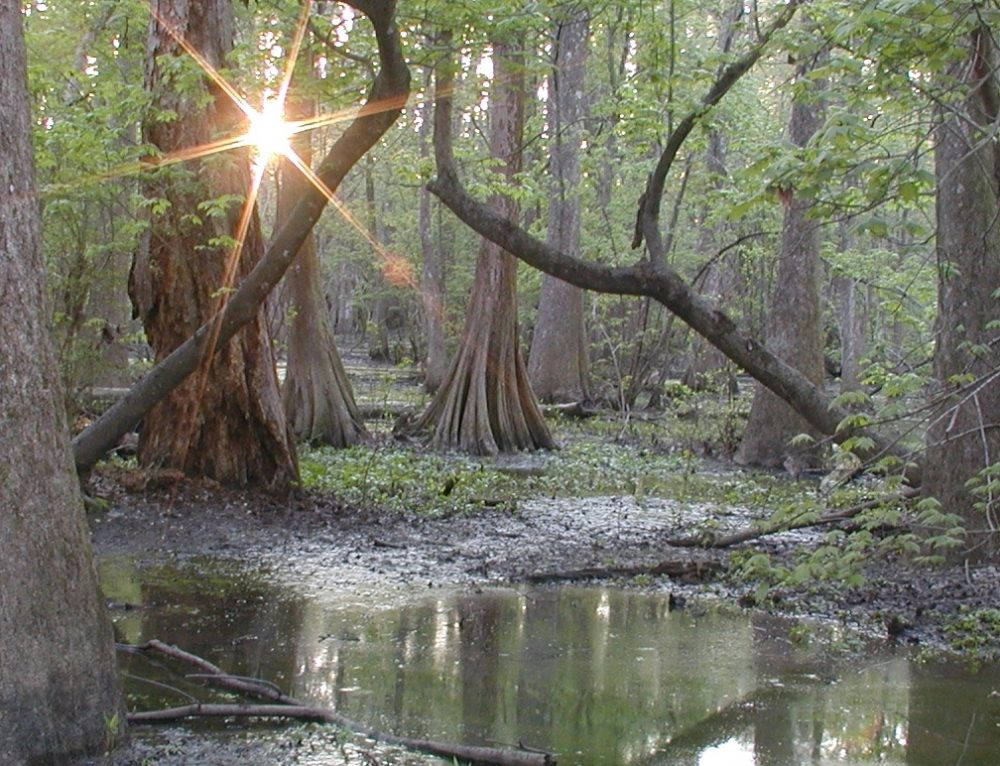 Experience Scenic Trails and Awesome Animal Encounters at the Delightfully Swampy Bluebonnet Swamp